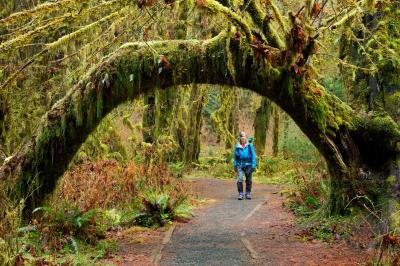 pictures of Olympic National Park - Hall of Mosses