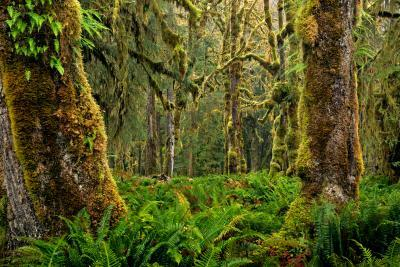 Olympic National Park photo locations - Graves Creek