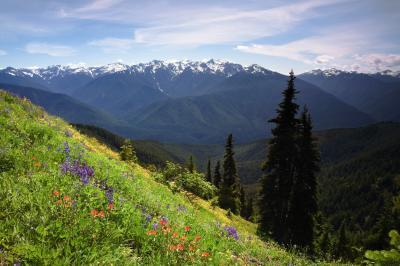 Olympic National Park photography locations - Hurricane Hill
