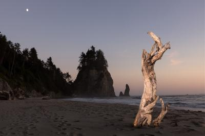 images of Olympic National Park - Mosquito Creek