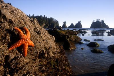 photos of Olympic National Park - Point of the Arches