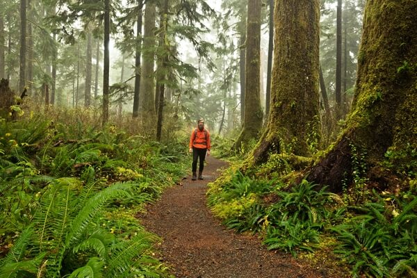 Hiker in Quinault Rain Forest
