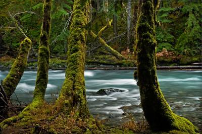 pictures of Olympic National Park - The Dosewallips