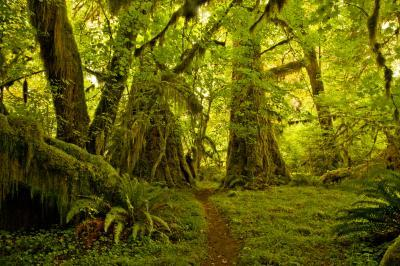 images of Olympic National Park - Queets River Trail