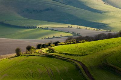 images of Brighton & South Downs - Cuckoo Bottom (South Downs NP)