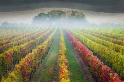 Southern Moravia photo spots - Josef Dufek vineyard