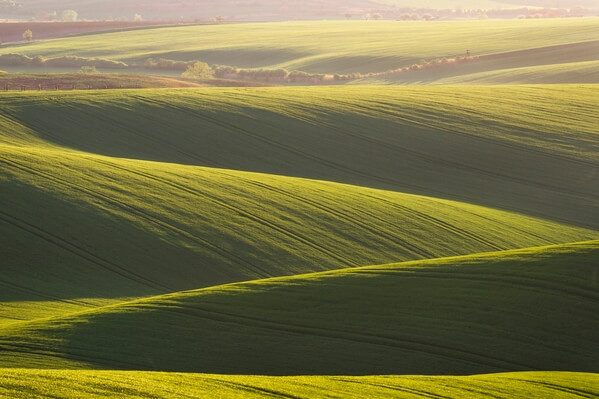 Rolling fields in the sunset - spring