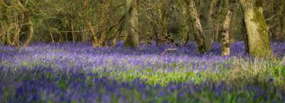 England photo spots - Lady's Wood