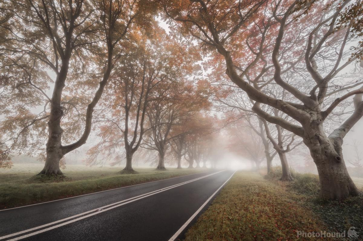 Image of   B3082 Beech Avenue by Chris Frost