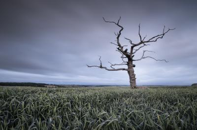 photos of Dorset -   Lone Tree At Tarrant Monkton