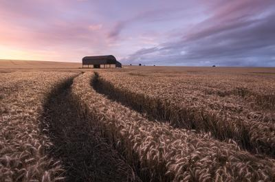 Dorset photography locations -   The Barn at Sixpenny Handley