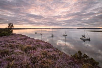 images of Dorset - Arne nature reserve