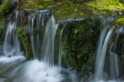 photography spots in California - Fern Springs