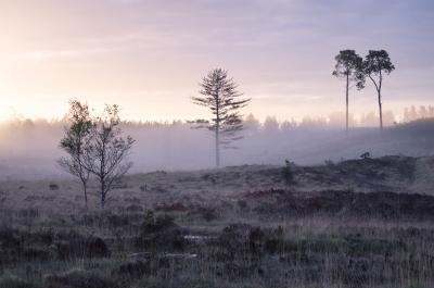 photography locations in Dorset - Wareham Forest