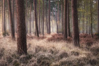 pictures of Dorset - Wareham Forest