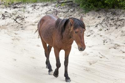 North Carolina photo locations - Wild Horses of the Currituck Outer Banks