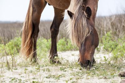 photo locations in North Carolina - The Wild Horses of Shackleford Banks