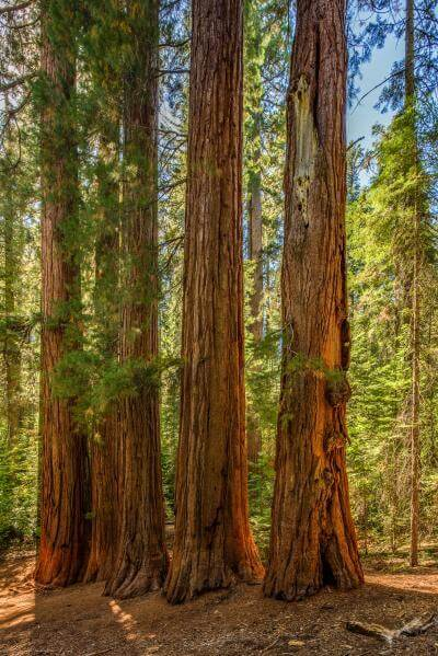 photo spots in California - Merced Grove of the Giant Sequoias