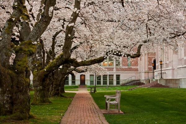 University of Washington, Seattle Campus photo spot