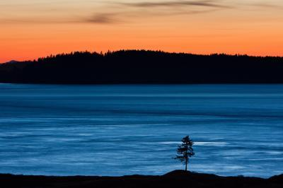 Photographing Puget Sound - Lone Fir, Chambers Bay