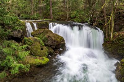 Puget Sound photo guide - Whatcom Falls