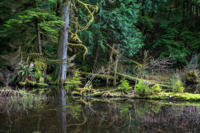 Puget Sound photo guide - Stimpson Family Nature Preserve