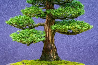King County photo locations - Pacific Bonsai Museum