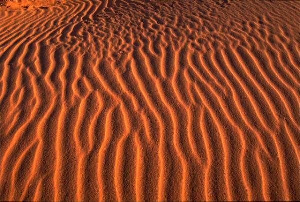 Utah photography locations - Coral Pink Sand Dunes
