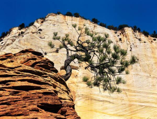 Utah photography spots - The Zion Plateau
