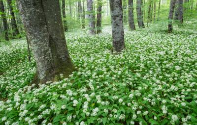 photography spots in Plitvice Lakes NP - Beechwood Forest