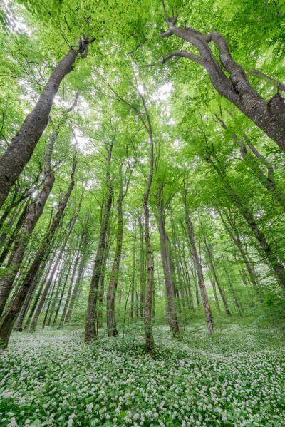 images of Plitvice Lakes NP - Beechwood Forest