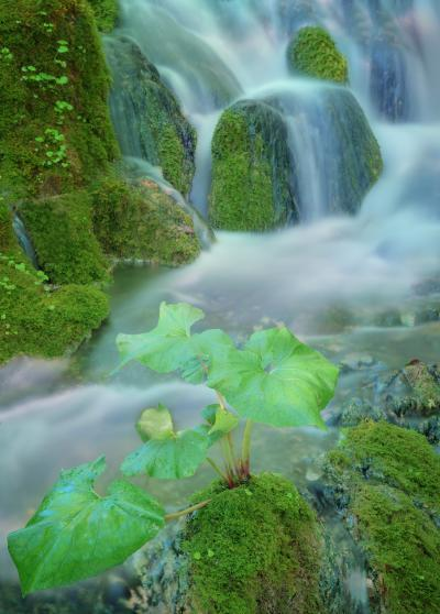 Plitvice Lakes NP photography spots - Mossy Cascades